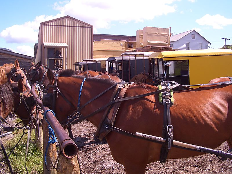 Amish auction big valley