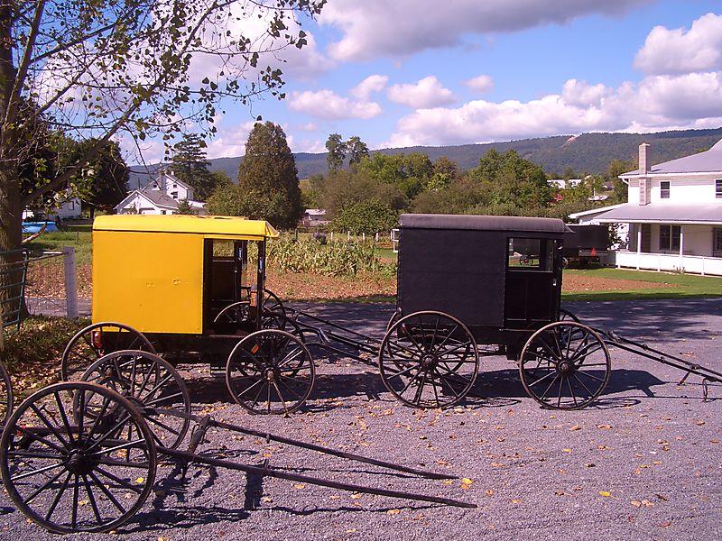 Big Valley buggy Byler Renno Amish