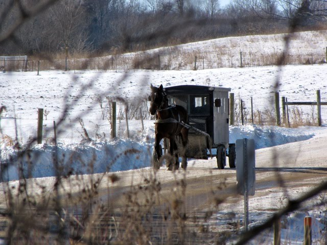 Old order mennonite buggy