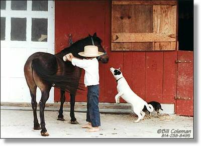 Amish_child_pony_bill_coleman_2