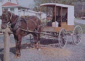 Amish3